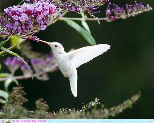Albino Birds Birdsoup