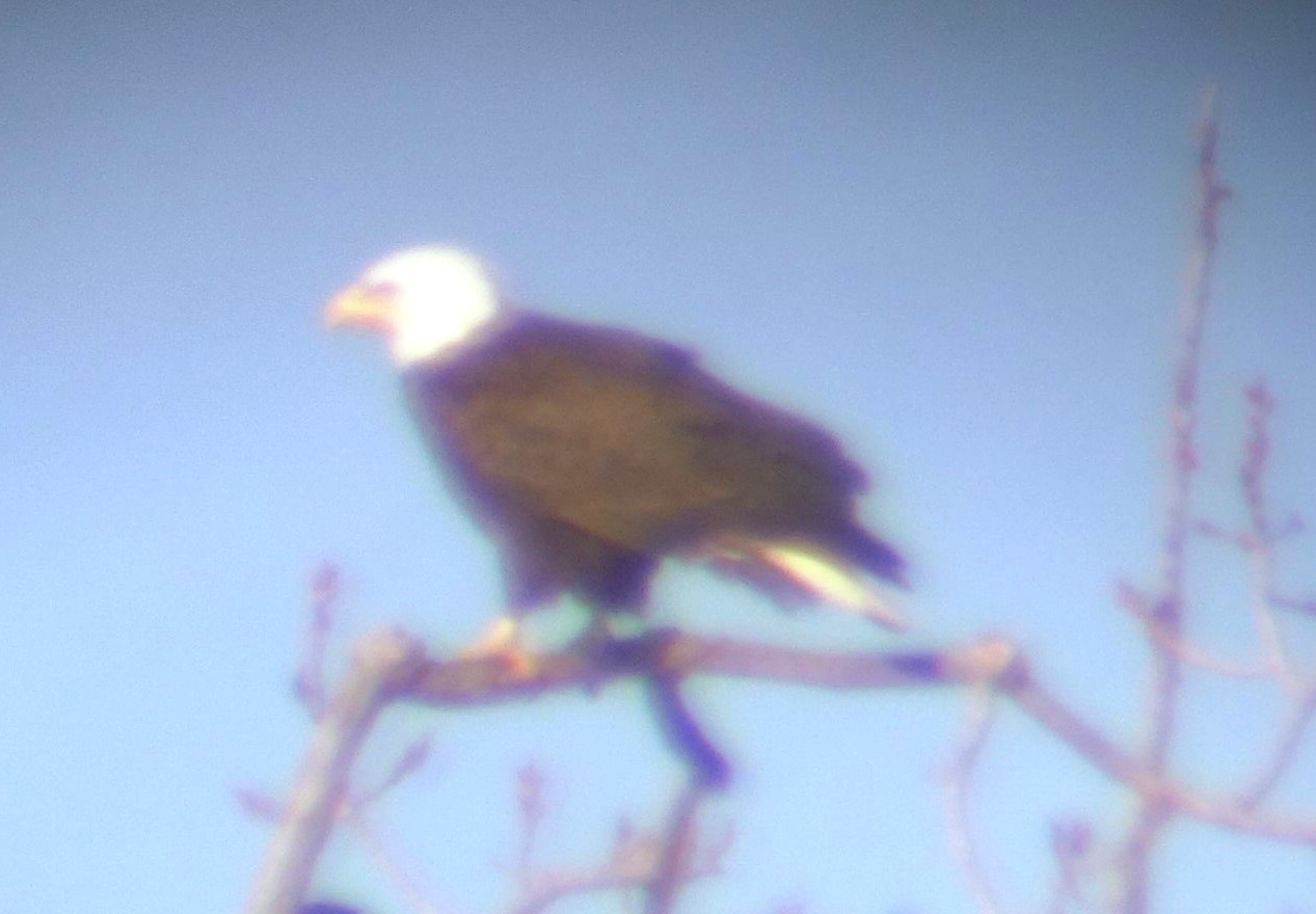 Eagle at Croton 2016
